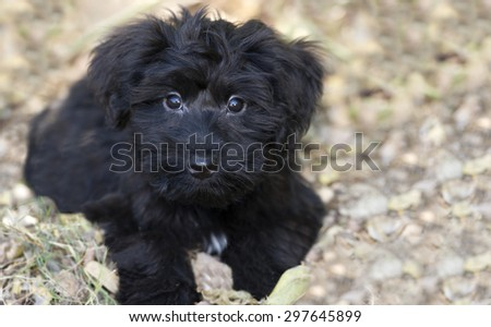 Adorable puppy is looking up with a cute face and eyes that speak for them self. - stock photo