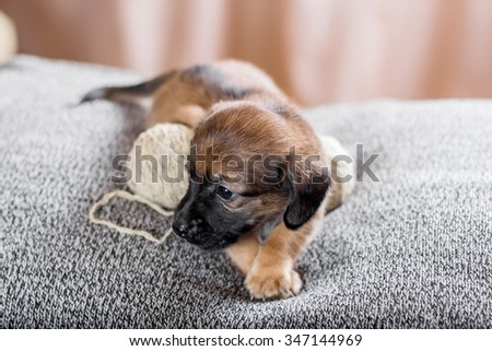 Adorable puppy lying on the sofa - stock photo