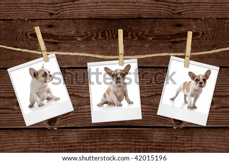 Adorable Puppy Pictures Hanging on a Rope - stock photo