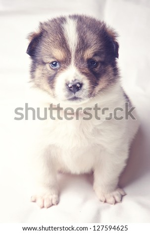 Adorable puppy sitting and looking at the camera. - stock photo