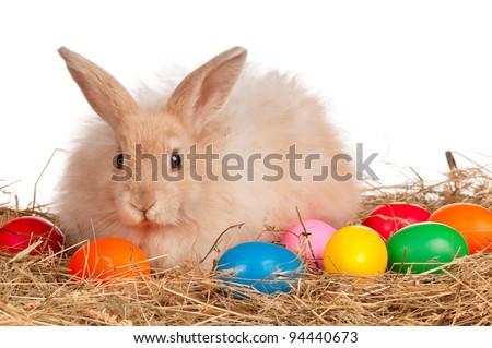 Adorable rabbit and Easter eggs on white background - stock photo