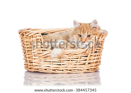 Adorable red cat sleeping in the basket isolated on white - stock photo