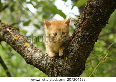 Adorable red kitten climbing the tree branches - stock photo