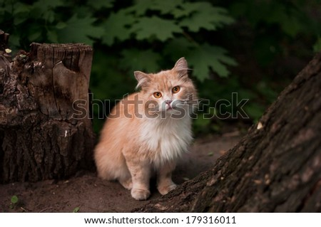 adorable sad homeless cat in the wild - stock photo