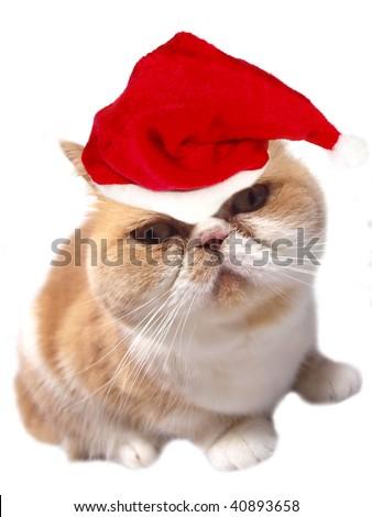 Adorable santa cat on white background - stock photo
