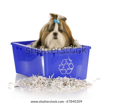 adorable shih tzu puppy sitting in recycle bin on white background - stock photo