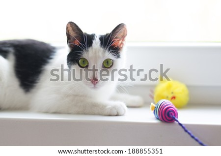 adorable shorthair black and white kitten with green eyes lying on windowsill - stock photo