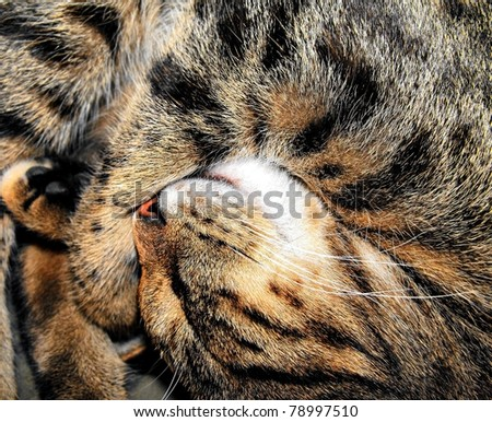 adorable sleeping cat