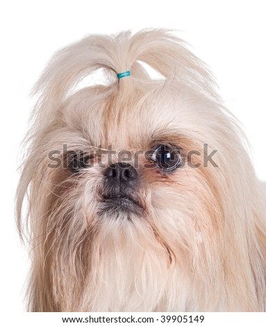 Adorable small dog on a over white background