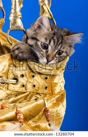 Adorable small kitty sitting in the golden bag - stock photo