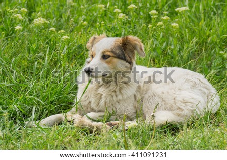 Adorable stray dog resting in spring grass - stock photo
