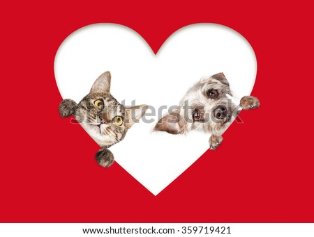 Adorable tabby cat and mixed terrier breed dog peeking out of a heart cutout of red paper - stock photo