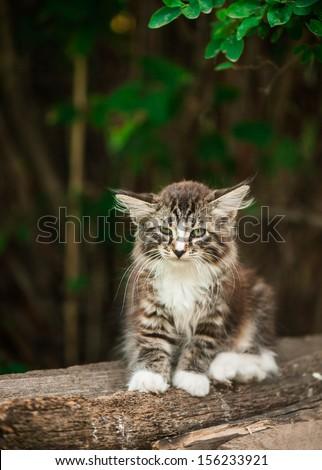 Adorable tabby kitten  - stock photo