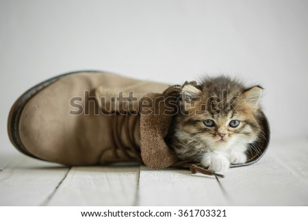 Adorable tabby kitten in a boot on the wooden floor - stock photo