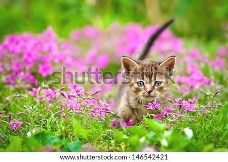 Adorable tabby kitten in flowers - stock photo