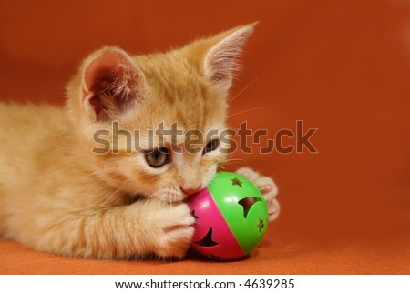Adorable tabby kitten playing with a ball - stock photo