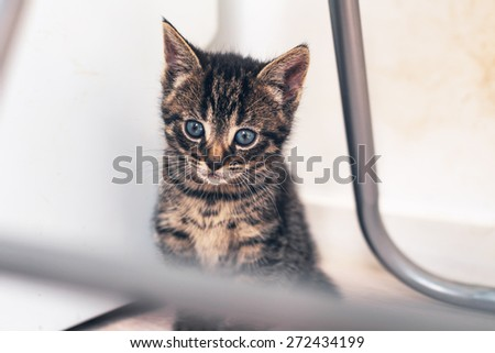Adorable tiny kitten with huge blue eyes sitting quietly under a metal chair watching the world outside - stock photo