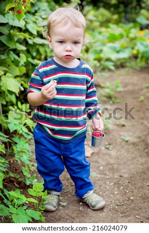Adorable toddler boy collects and eats raspberries in a garden - stock photo