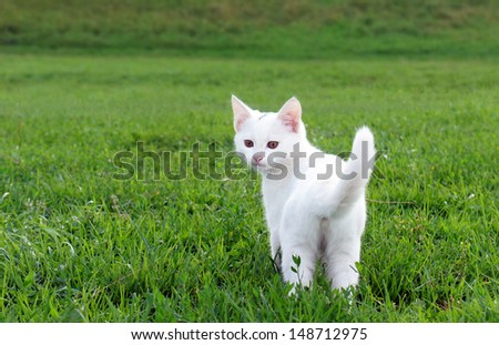 Adorable white kitten in the grass - stock photo
