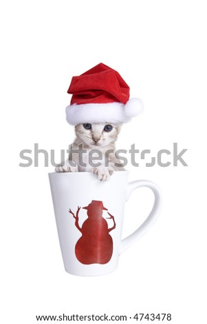 Adorable white kitten inside Christmas mug with Santa hat on, isolated on white - stock photo