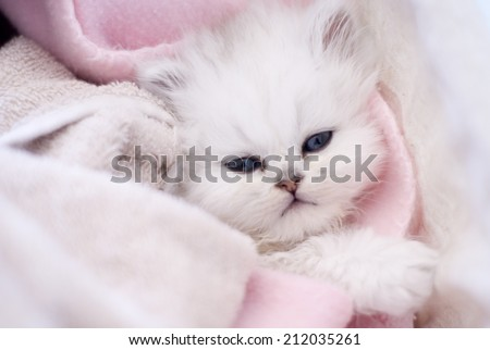 Adorable white little cat in a basket