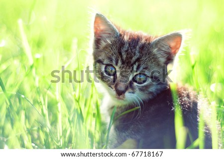 adorable young cat in the grass
