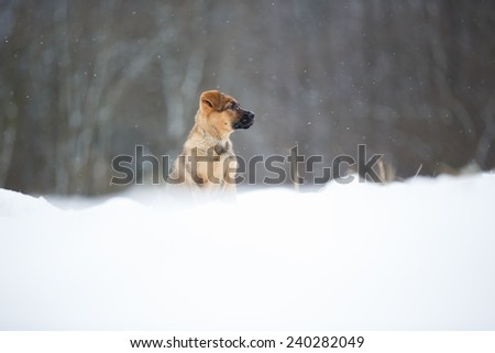 Adorable young puppy in snowy field. Playful young dog in snow. Little puppy sitting and looking to camera. - stock photo