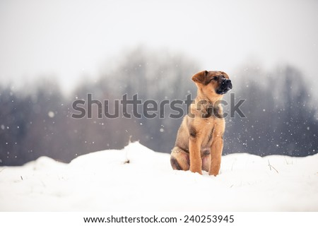 Adorable young puppy running through snowy field. Playful young dog in snow. Color toned image. - stock photo
