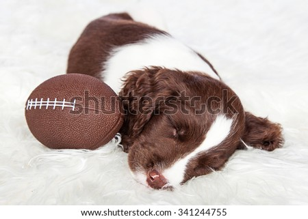 Adorable young puppy sleeping next to a football laying on a fur rug - stock photo