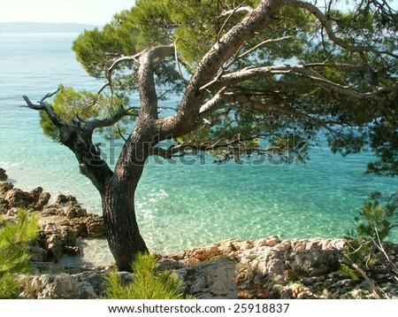 Adriatic seaside - Makarska Riviera, Dalmatia, Croatia. - stock photo