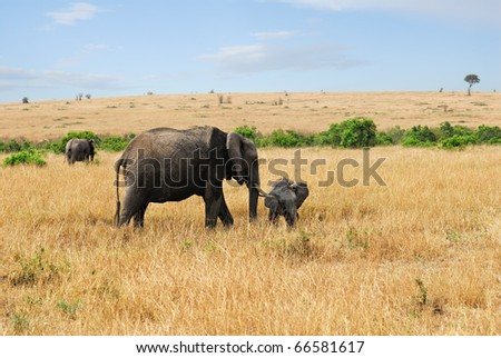 Adult African elephants with baby in the savannah