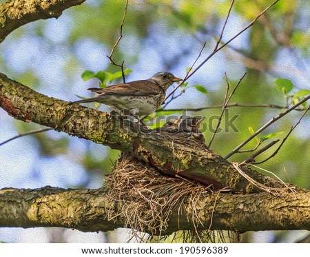 Adult bird of turdus pilaris farefield species feeding its nestlings in the nest positioned on the tree, stylized and filtered to resemble an oil painting. - stock photo