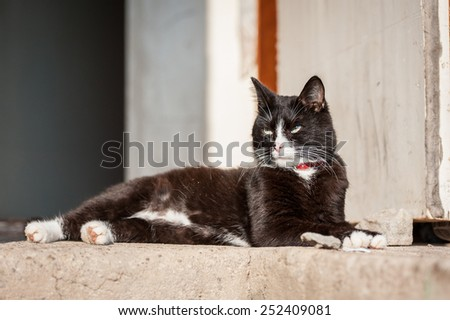 Adult black and white cat - stock photo