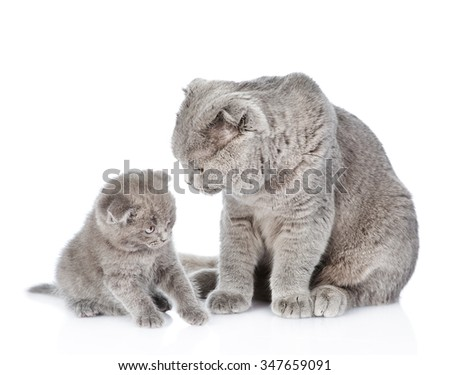Adult cat brings up a a kitten - stock photo