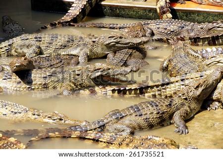 Adult crocodiles at rest and sleeping Long Xuyen Crocodile Farm, Mekong Delta,  Vietnam - stock photo