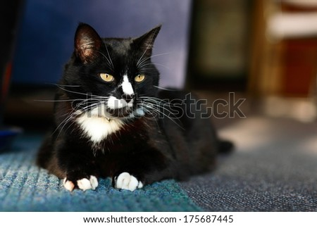 Adult domestic cat resting on green and grey carpet.