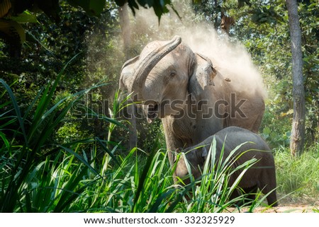 Adult Elephant and baby elephants living in the wild