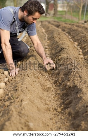 Adult male hand planted potatoes (shallow DOF). - stock photo