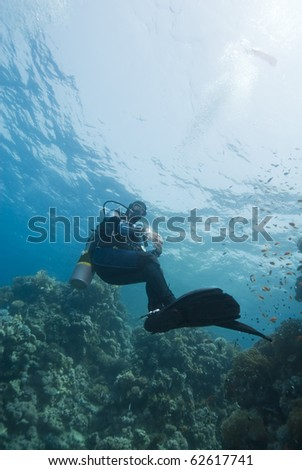 Adult male scuba diver performing a safety stop underwater at the end of a recreational dive. Near Garden, Sharm el Sheikh, Red Sea, Egypt.