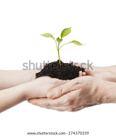 Adult man and woman sharing seedling plant isolated on a white background - stock photo