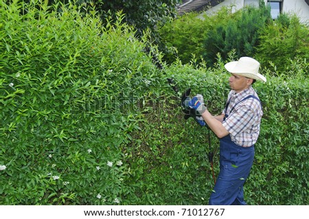 Adult man (gardener) in the blue overalls and straw hat cutting hedge with a electric hedge cutter - stock photo