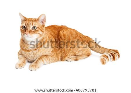 uti cat home remedy