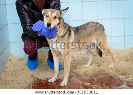 adult stray dog in shelter kind charming - stock photo