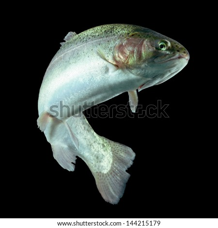 ADULT TROUT FISH ISOLATED ON BLACK   - stock photo