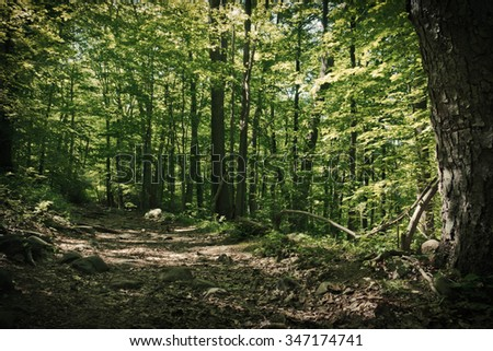 Adventurous trail with lush vegetation during early spring