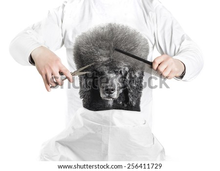 Advertising idea for Pets Grooming with Poodle haircut - stock photo