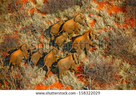 Aerial photo of migrating elephant herd - stock photo