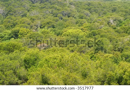 Aerial shot of a Forest - stock photo
