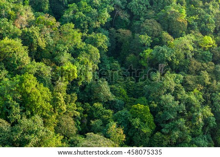 Aerial shot of a lush tropical forest 3