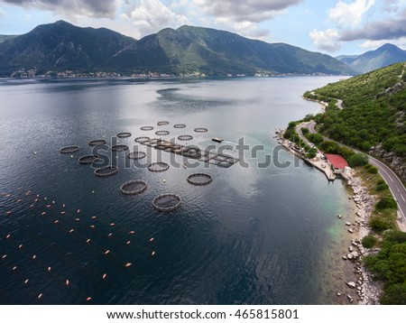 Aerial view at the fish farming in round ponds in the Kotor bay, coastal road lead to Perast, Montenegro
